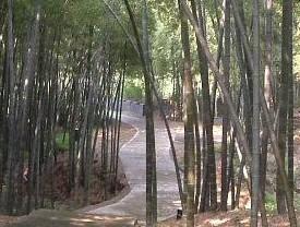 东庵森林公园
