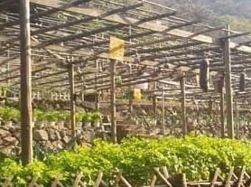 金寨天马自然保护区