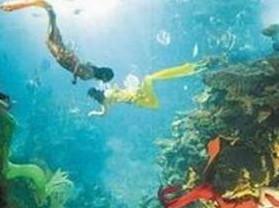 集美海洋动物馆