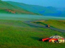 美丽的格桑花草原
