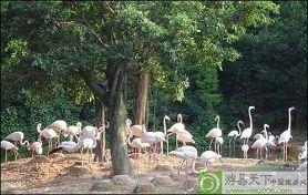 长隆夜间野生动物园