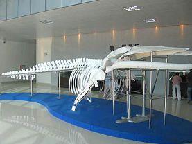 湛江海洋大学水生生物博物馆