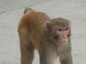 猴子沟自然保护区
