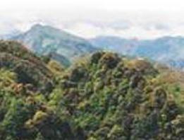 仙鹤坪自然保护区