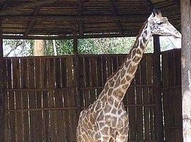 东山湖野生动物园