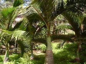 大花角自然保护区