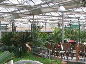 荷塘月色生态美食园