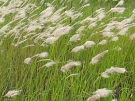 孟津黄河湿地