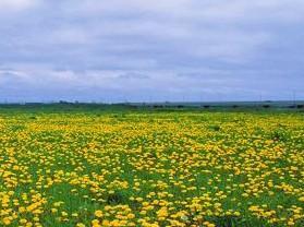 杜尔伯特大草原