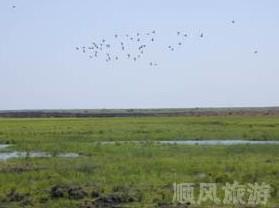萝北苇场野生水禽栖息地