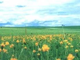 巴彦他拉草原