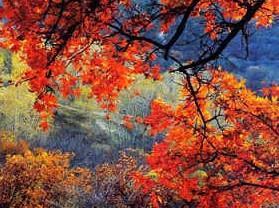 大青沟国家级自然保护区