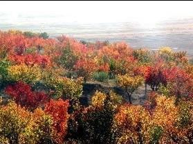 南华山风景区