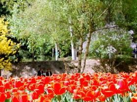 西宁植物园