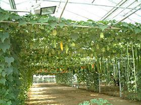 蔬菜高科技示范园