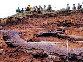 易门恐龙化石