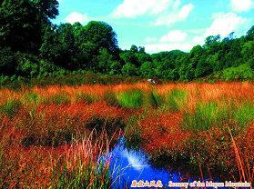 龙泉国家级森林公园