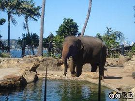 塔瑞噶野生动物园