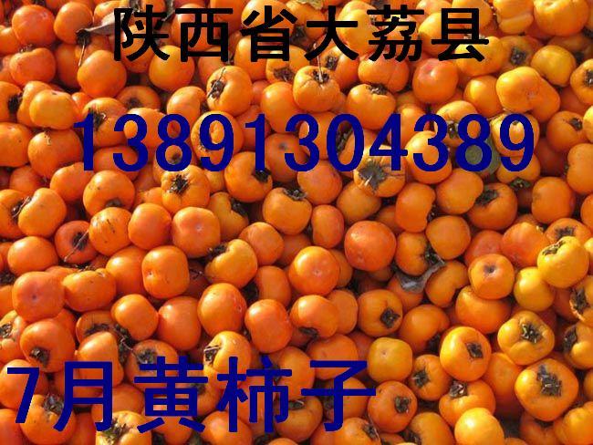陕西柿子基地金钱柿子尖顶柿子日本甜柿子产地