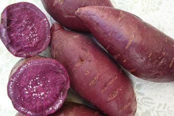地瓜、红薯、地瓜苗、种薯、红薯薯苗15606389958