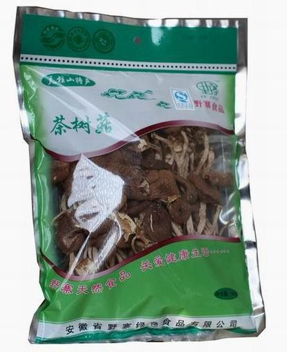 食用菌 茶树菇