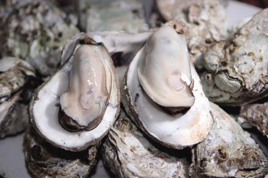 带壳海蛎 湿龙须菜