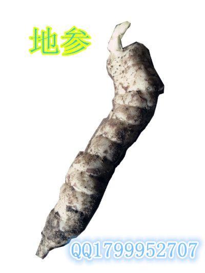 特色蔬菜品种地参