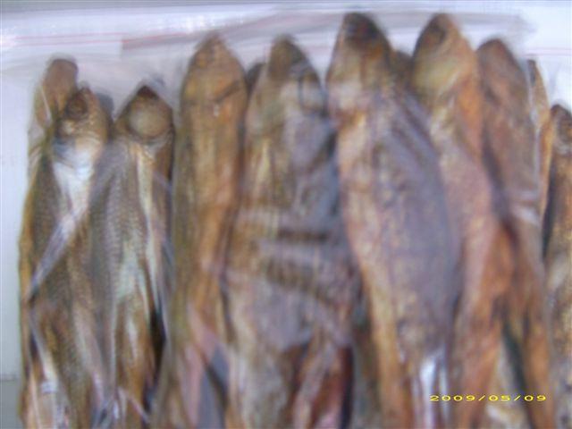 半江条子鱼