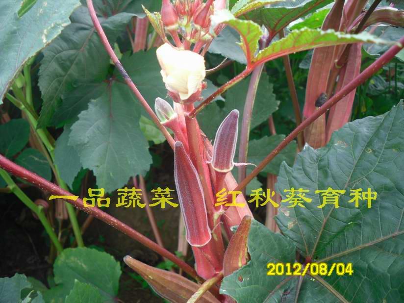 黄秋葵/红秋葵