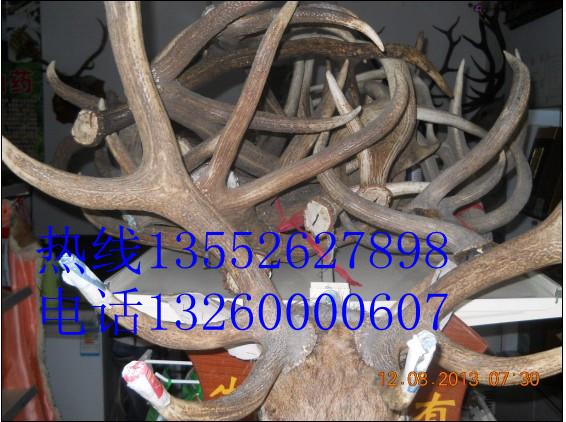 鹿角北京哪里卖鹿角