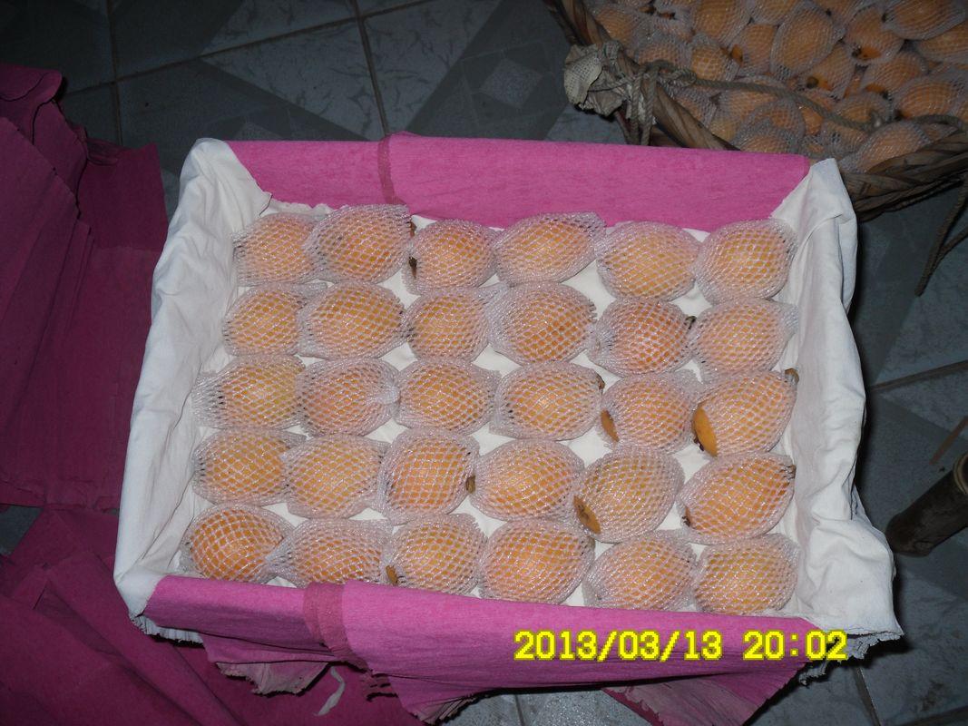 莆田枇杷果园直销、枇杷批发、礼品盒包装、欢迎预定