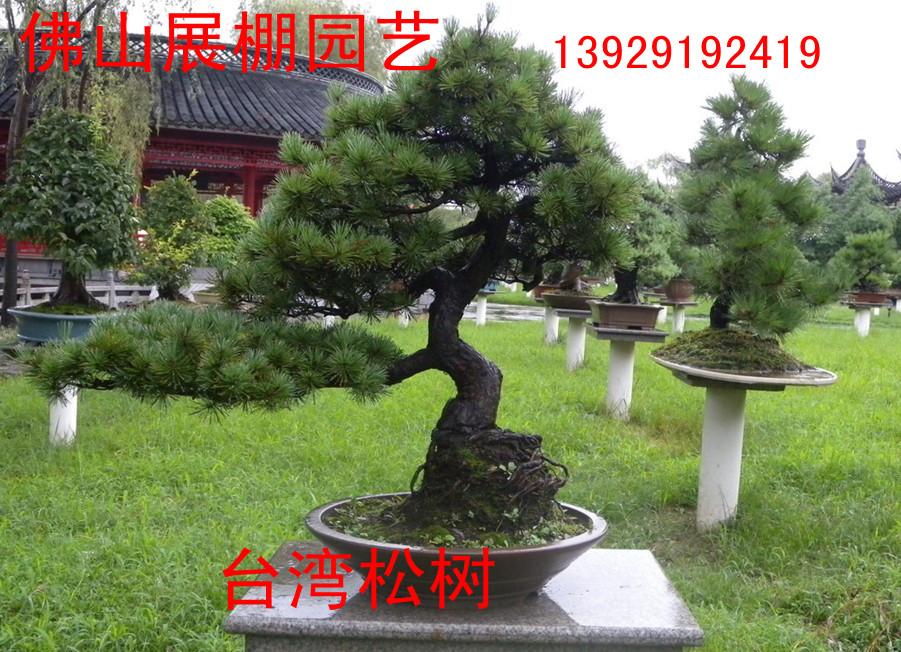 桂花树 红枣树