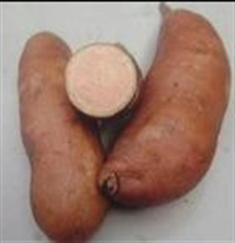 烤地瓜专用优质红薯