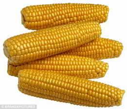 求购玉米大豆高粱