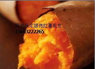 供应全国各地地瓜坊 烤红薯