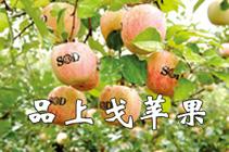 上戈苹果、核桃、柿饼、地道中药材