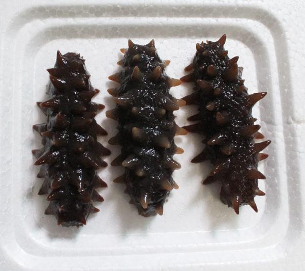 鹰潭市 海参-带鱼-鲍鱼-海鳗-鳕鱼