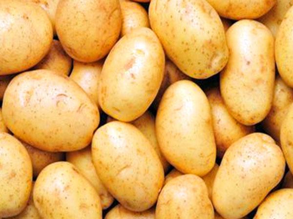 乌兰察布马铃薯