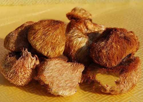 通化-猴头蘑