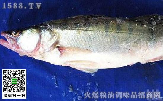 雅罗鱼(华子鱼、白鱼)