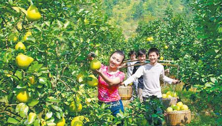 中国甜柚之乡