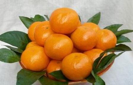 天台山蜜橘