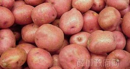 周营红皮土豆