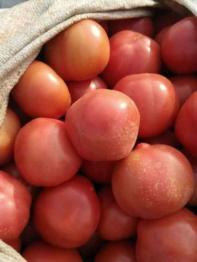 泗水西红柿