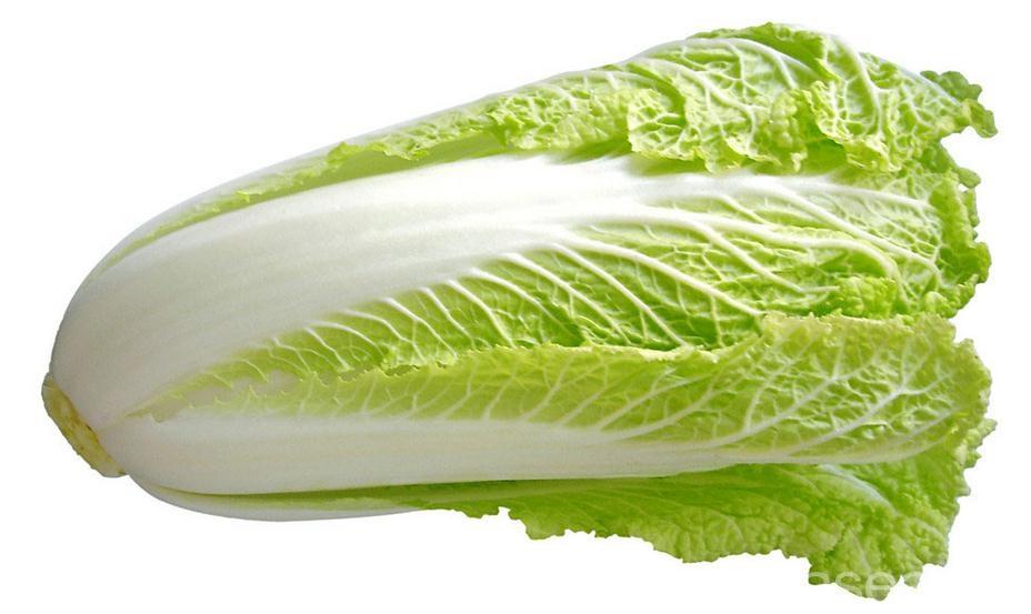 泰安大白菜