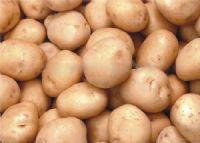 新泰宫里土豆