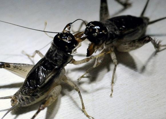蟋蟀飞机螺旋桨