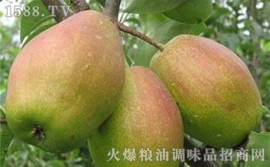 浚县窑头红梨