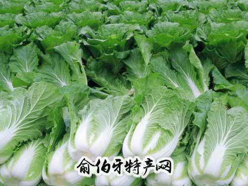 利川天上坪大白菜