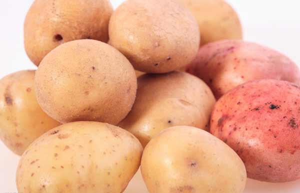 竹园马铃薯